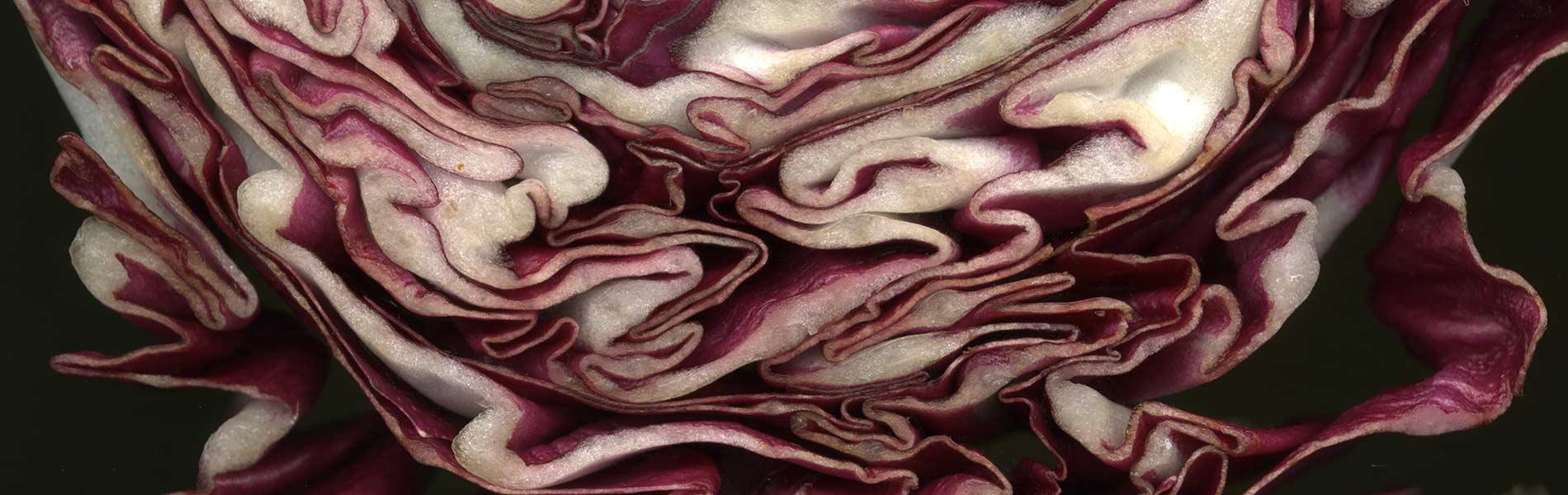 gasthaus-frohe-aussicht-vegetarisch-essen